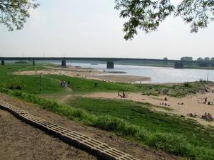 Sommerstimmung am Rhein