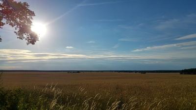 Sonne über den Feldern