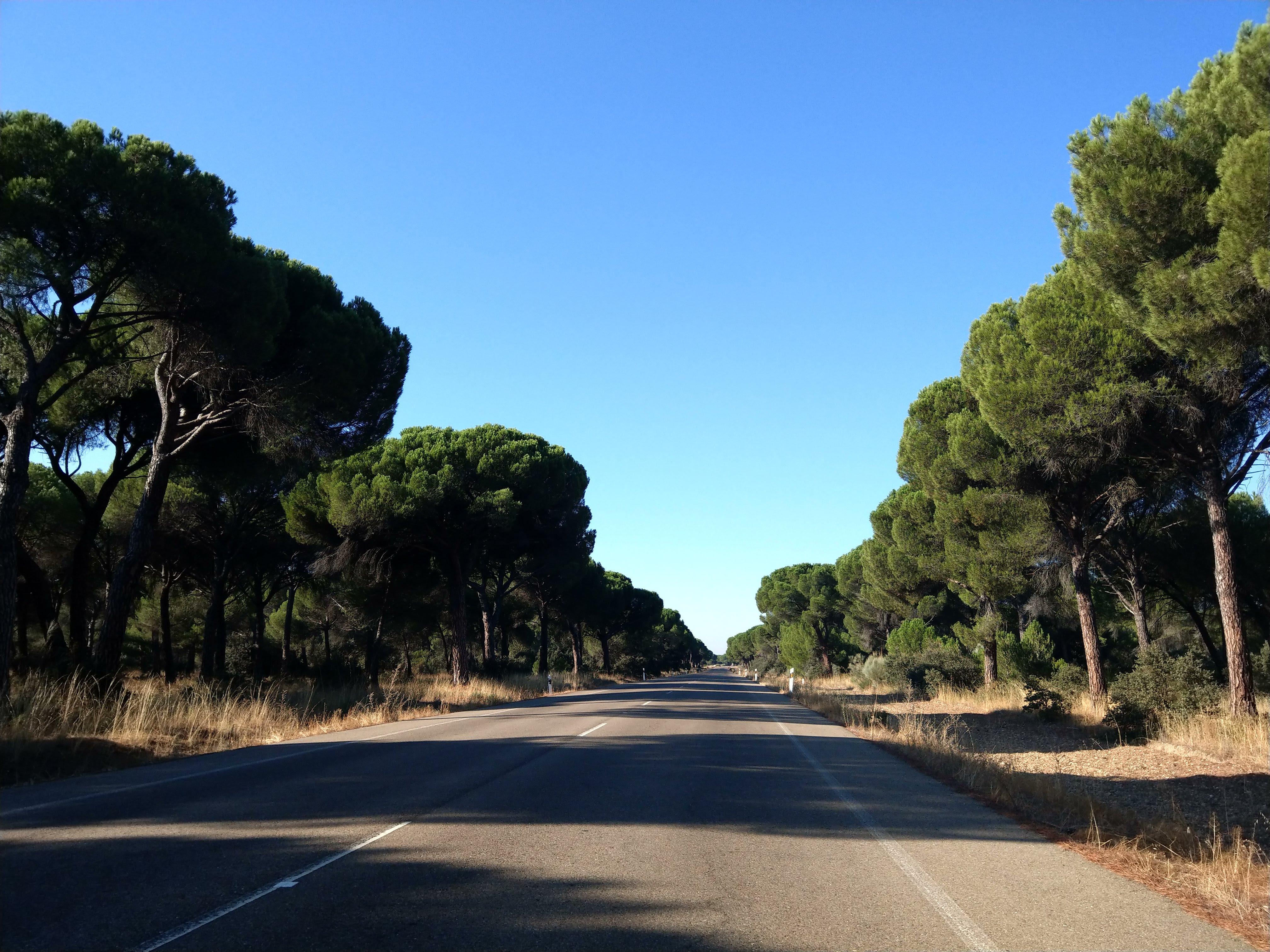 Straße mit Bäumen und Schatten