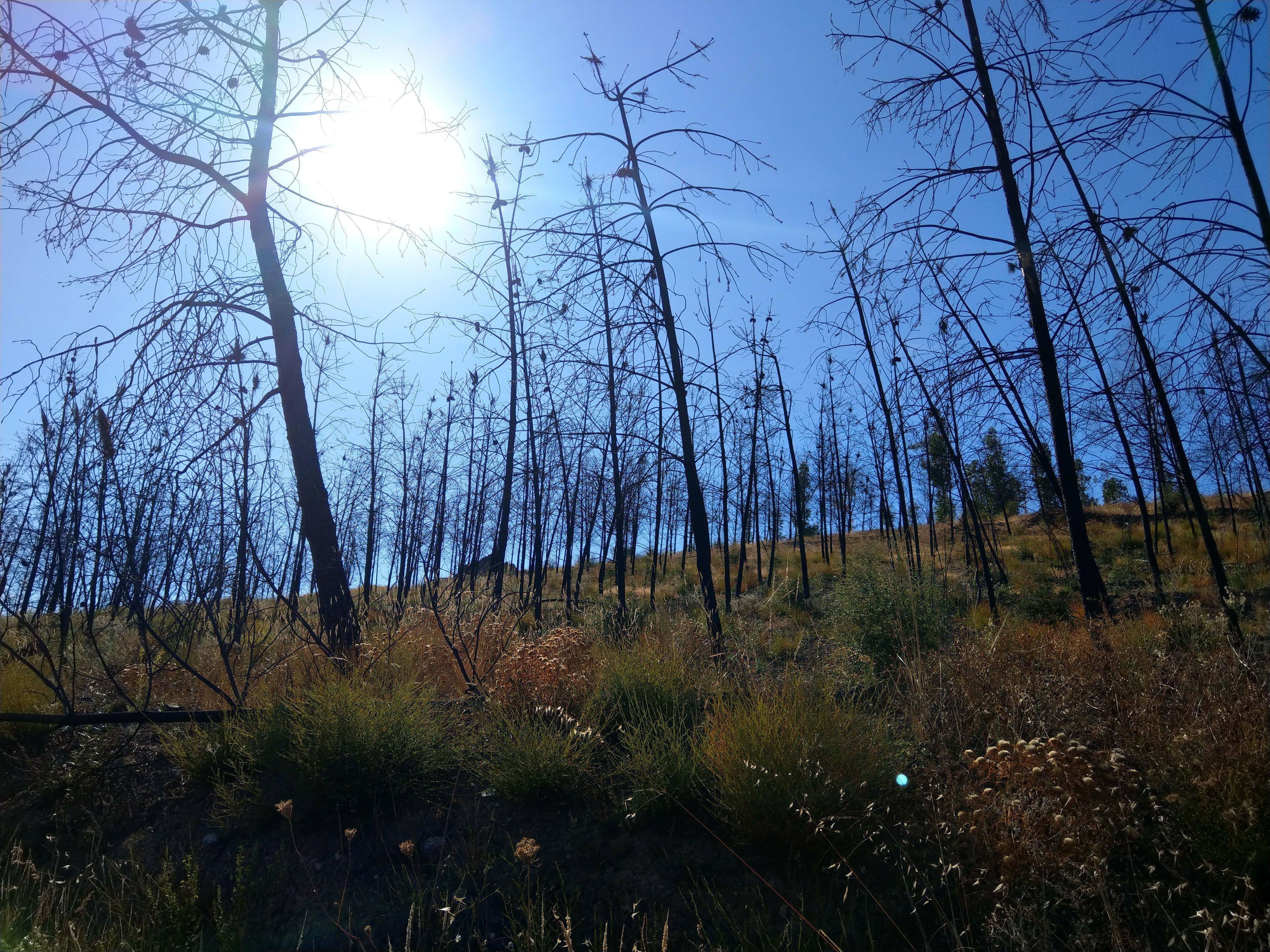 Waldbrandspuren