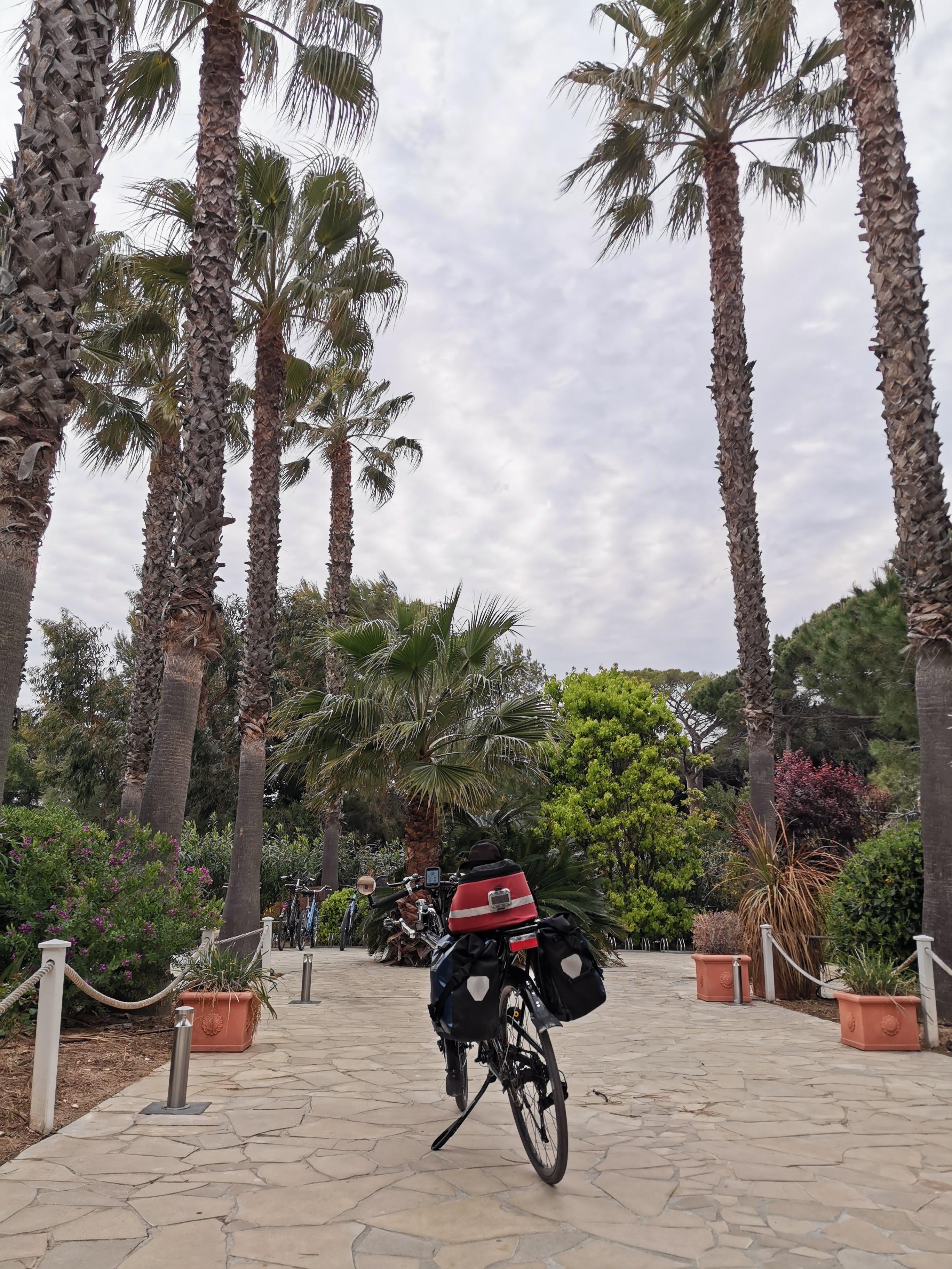 Abfahrbereit unter Palmen