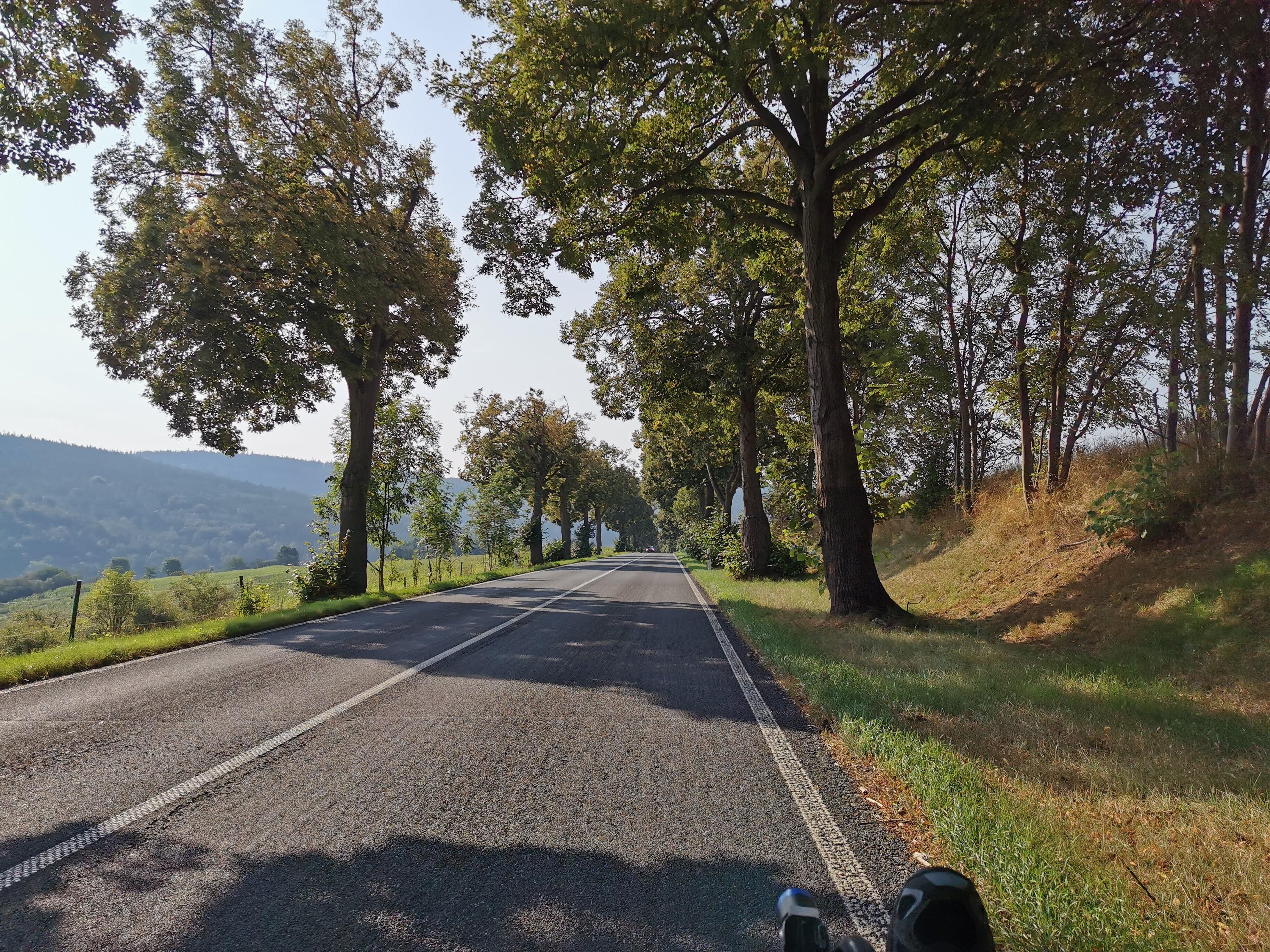 Allee in Thüringen